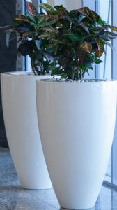Tall Fibreglass Jar Pots from potstore.co.uk